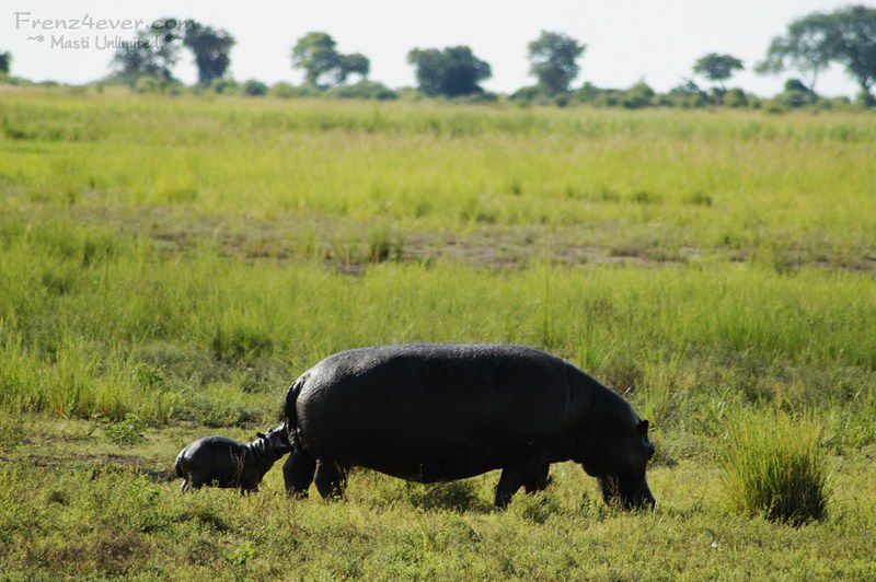 Amazing African Wildlife - Page 2 AW14_zpsd8026aae