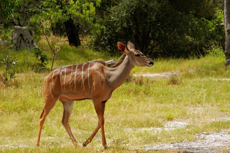 Amazing African Wildlife - Page 2 AW15_zps9ab8aebb