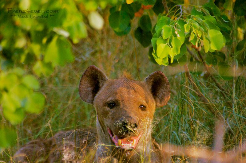 Amazing African Wildlife - Page 2 AW16_zps4d04b1e8