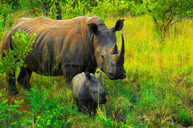 Amazing African Wildlife - Page 2 AW1_zps6999d377