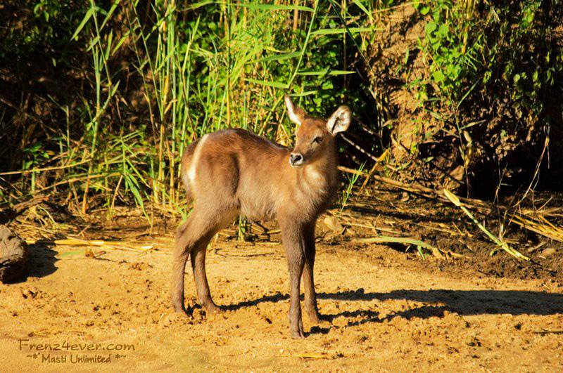Amazing African Wildlife AW21_zpseab01d5d