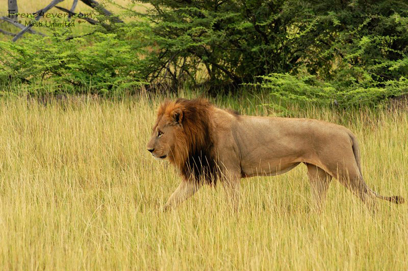 Amazing African Wildlife AW25_zps3ba95292