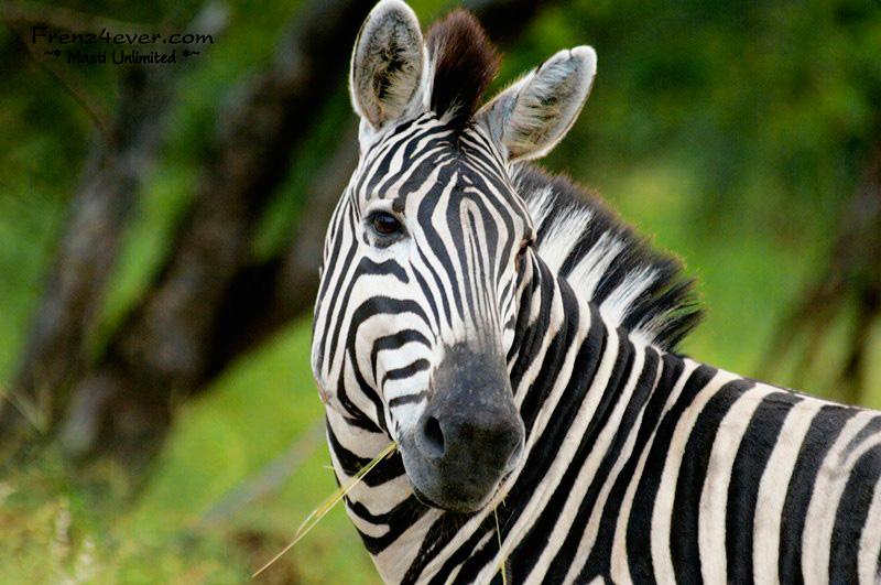 Amazing African Wildlife AW32_zps65c22507