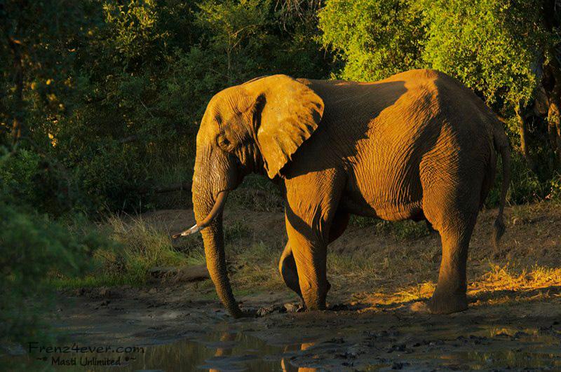 Amazing African Wildlife AW33_zps19956427