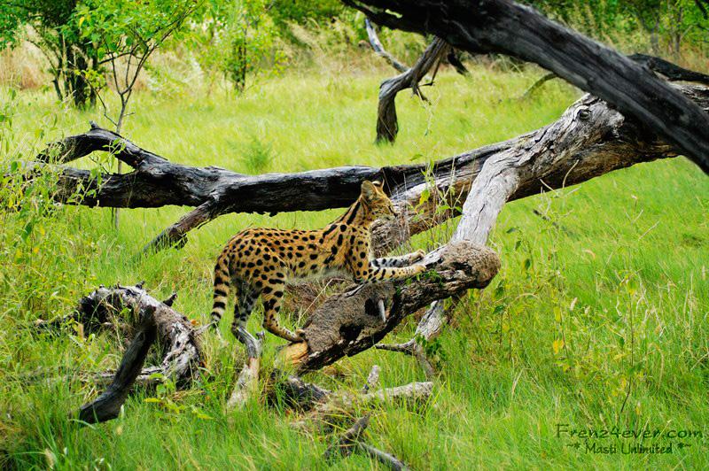 Amazing African Wildlife AW36_zpsbbd4c03f