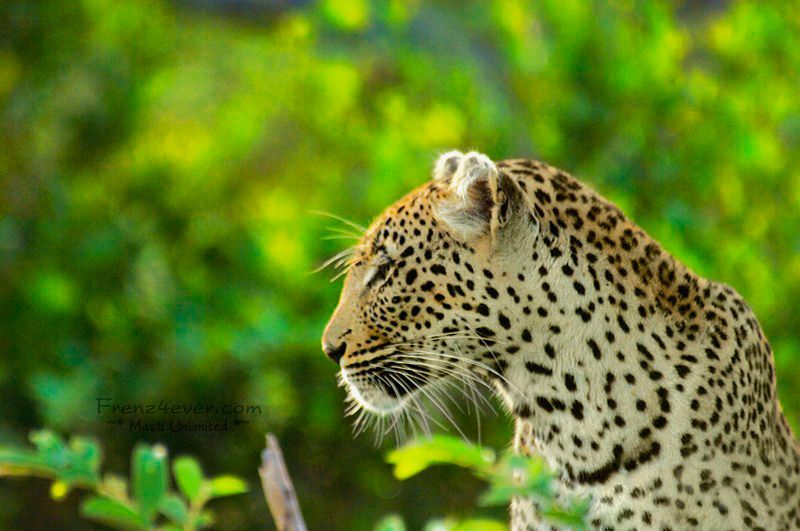 Amazing African Wildlife - Page 2 AW3_zps3bb5bdbd