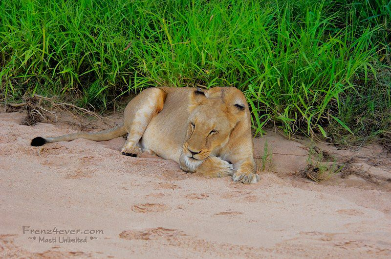 Amazing African Wildlife - Page 2 AW4_zps5ac7c7b0
