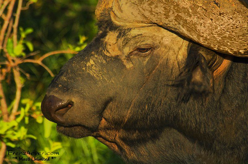 Amazing African Wildlife - Page 2 AW5_zps06028b42