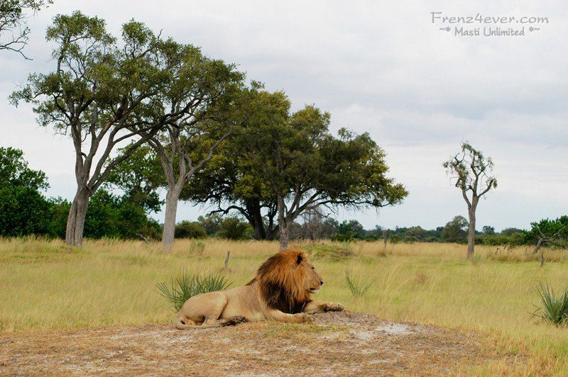 Amazing African Wildlife - Page 2 AW6_zps6694859d