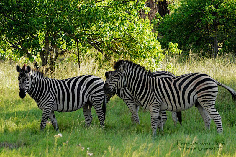 Amazing African Wildlife - Page 2 AW7_zps710ae4c4
