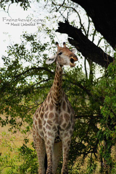 Amazing African Wildlife - Page 2 AW9_zps4acbe04d