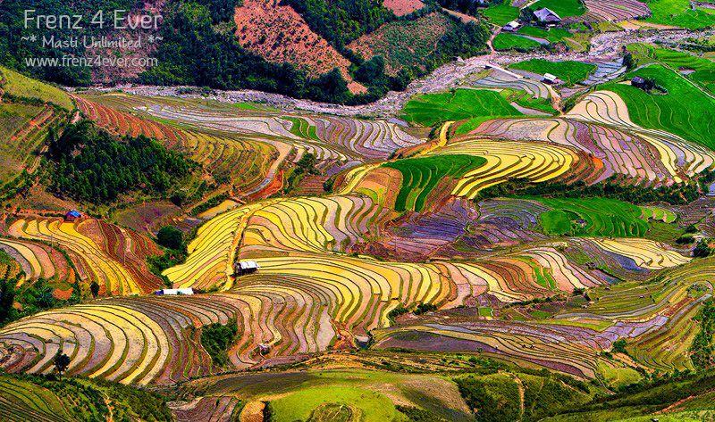 Beautiful Terraced Rice Fields Terraced-Rice-Fields-10_zps8dced6de
