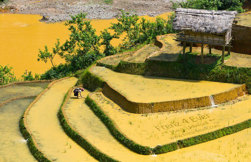 Beautiful Terraced Rice Fields Terraced-Rice-Fields-11_zpsf2d5e6f8