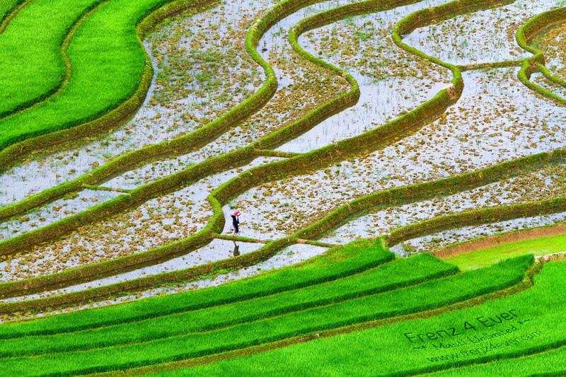Beautiful Terraced Rice Fields Terraced-Rice-Fields-12_zps5312f5b1