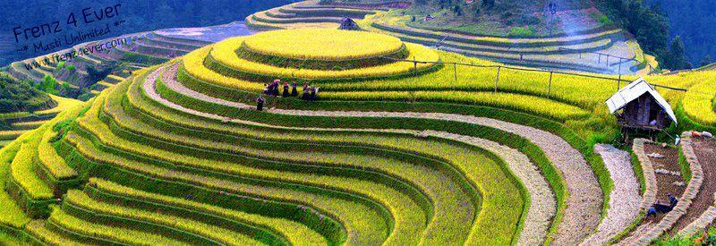 Beautiful Terraced Rice Fields Terraced-Rice-Fields-14_zps0ca4c292