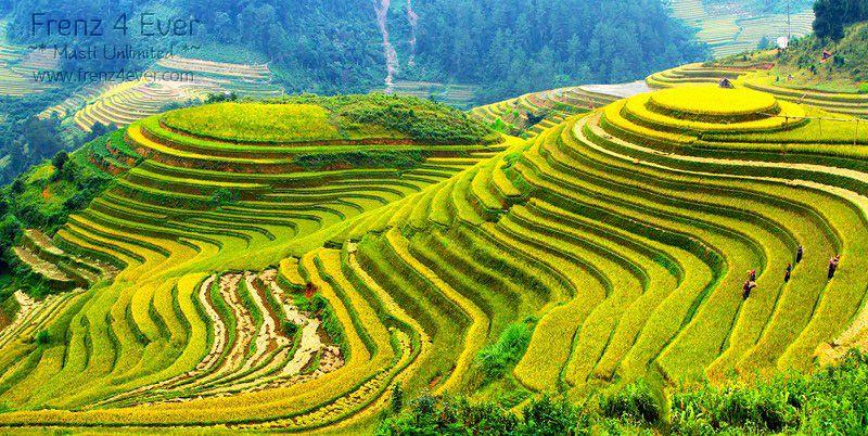 Beautiful Terraced Rice Fields Terraced-Rice-Fields-15_zps858e634a