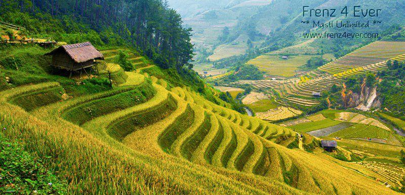 Beautiful Terraced Rice Fields Terraced-Rice-Fields-16_zpsae44a412