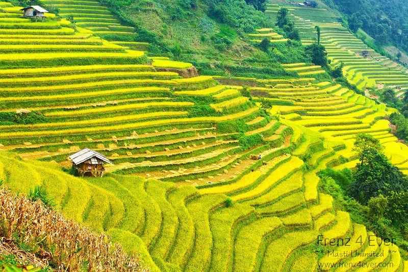 Beautiful Terraced Rice Fields Terraced-Rice-Fields-17_zps578fccaf
