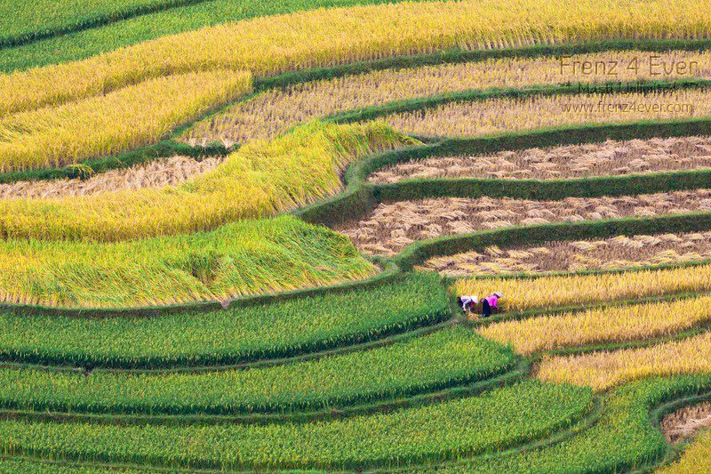 Beautiful Terraced Rice Fields Terraced-Rice-Fields-1_zpsdd561e57