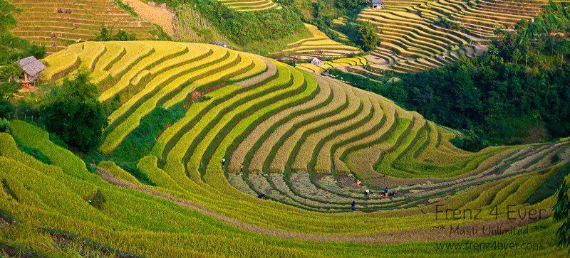 Beautiful Terraced Rice Fields Terraced-Rice-Fields-2_zps34d92348