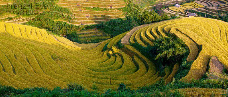 Beautiful Terraced Rice Fields Terraced-Rice-Fields-3_zps40b949ac