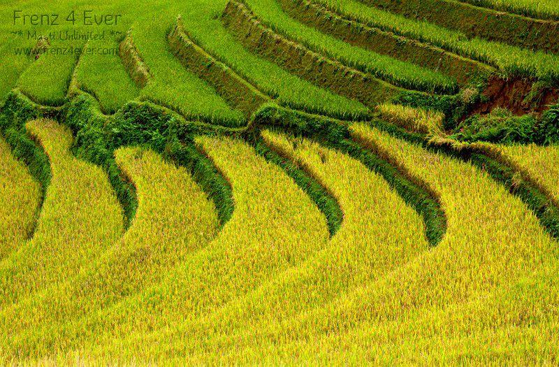 Beautiful Terraced Rice Fields Terraced-Rice-Fields-4_zps9eda52af