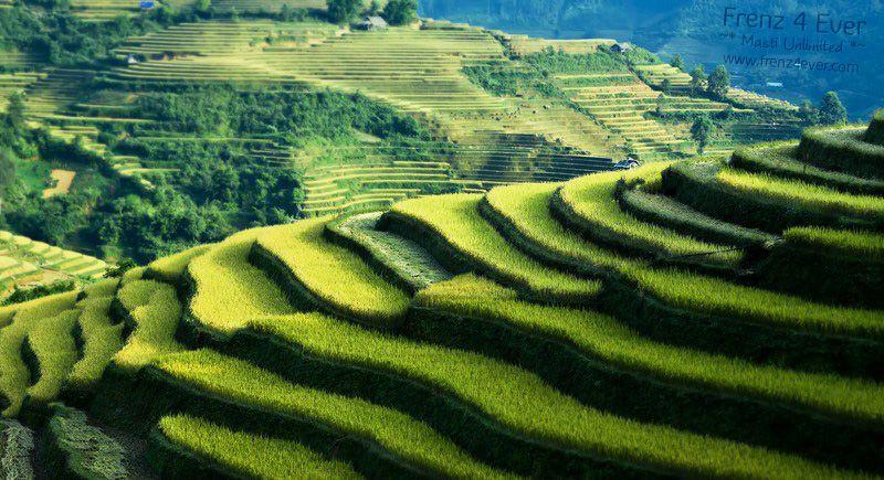 Beautiful Terraced Rice Fields Terraced-Rice-Fields-5_zpsa396ae04