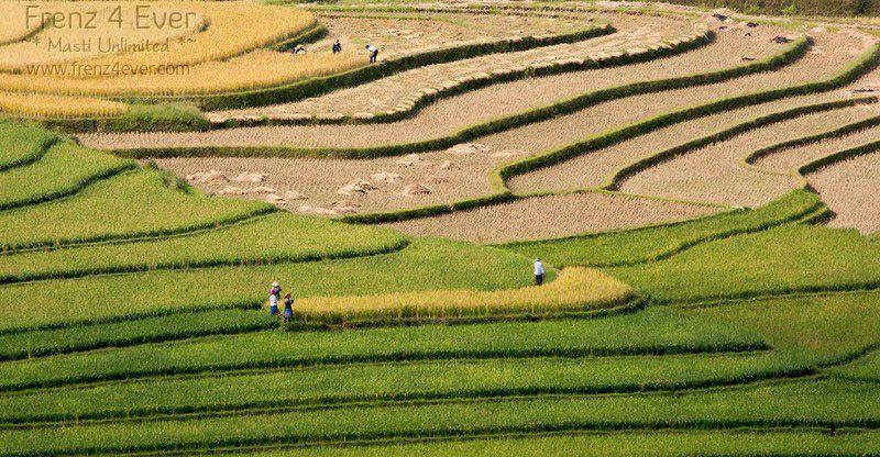 Beautiful Terraced Rice Fields Terraced-Rice-Fields-6_zpsaf064463