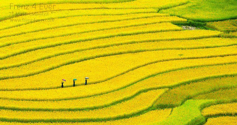 Beautiful Terraced Rice Fields Terraced-Rice-Fields-8_zps94fd5b29