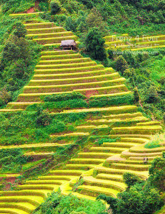 Beautiful Terraced Rice Fields Terraced-Rice-Fields-9_zpsb3e75ec6
