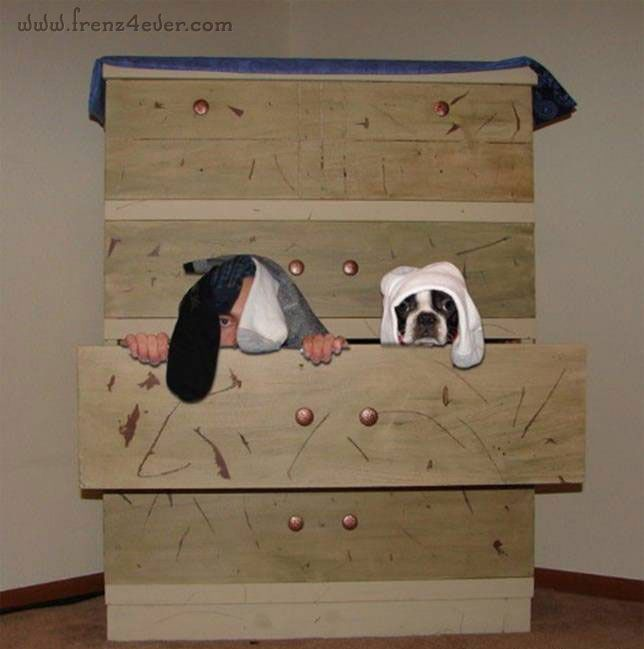 Funny Animal Pics Fa18_zps13dd7a64