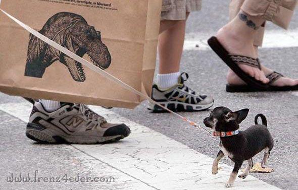 Funny Animal Pics Fa22_zps925e3cd6