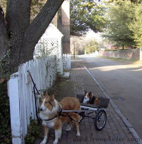 Funny Animal Pics Fa4_zps13893170