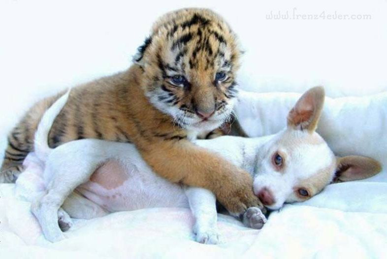 Funny Animal Pics Fa5_zps9d90c095