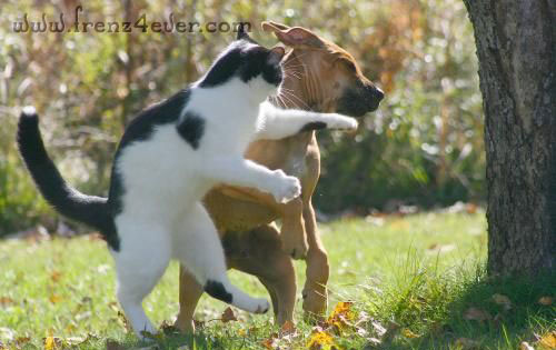 Funny Animal Pics Fa9_zps0a34ee62