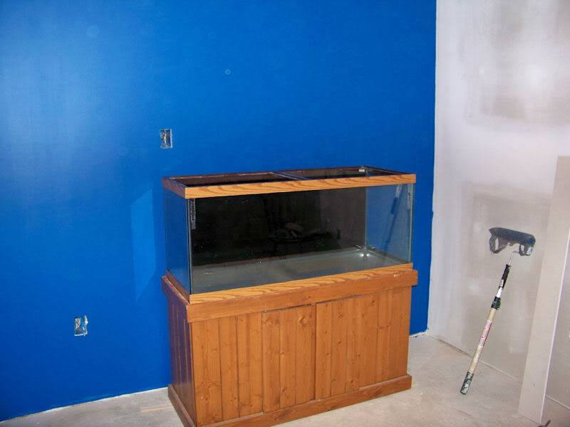 The Fish Room (Round 2) Firsttank