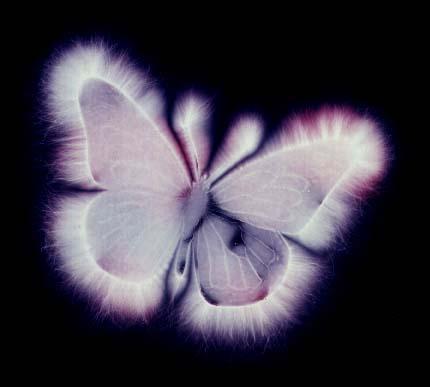 Fotografía Kirlian Butterfly_zps807feca7