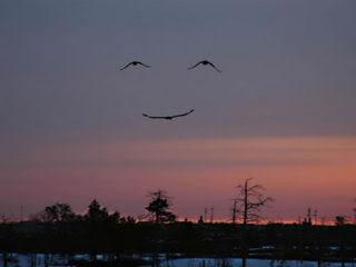 Smile Of The Day Smileoftheday
