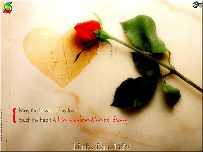 Đóa hoa hồng tặng người tôi iu!^_^ Hong-1