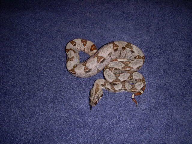 het moonglow Snakes013