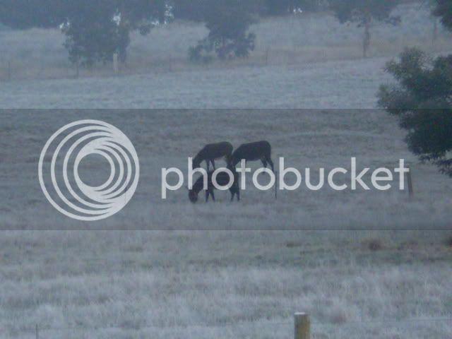 Winter Wonderland Here In The Goldfields P6191114