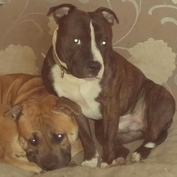 me 2 gorgeous boys bailey n tyson 10845971_10152605355317897_2494617109164283148_n