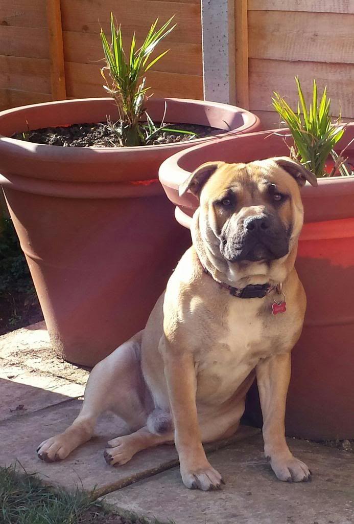 bailey enjoying the sun 20140309_135001-1-1