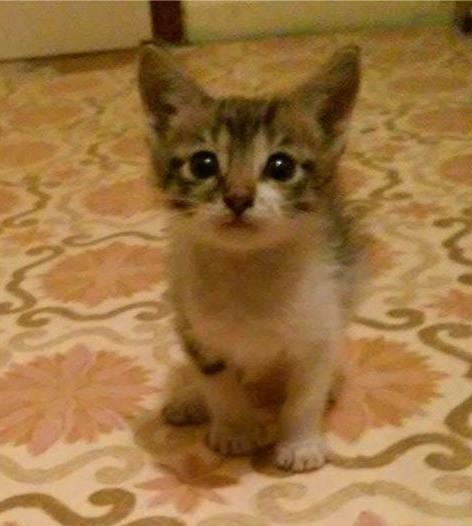 Χαρίζεται μωρό γατάκι!! FotoFlexer_Photo_zpsza622rze