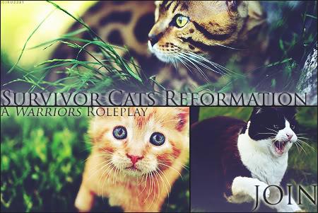 Survivor Cats Reformation SCRAdv2