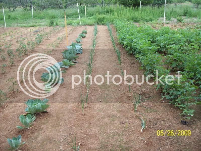 Gardening Thread Garden20093