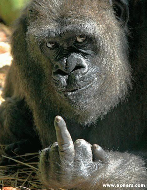 Bonjour peeps Monkey
