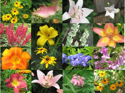 dhuroni lule nje antari..:):) - Faqe 3 Flowers-2-photos