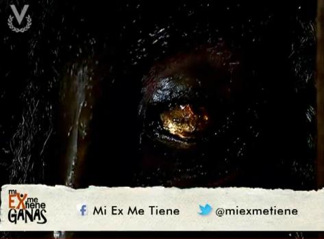 Mi Ex Me Tiene Ganas / ჩემს ყოფილს ვუნდივარ (Venevisión, 2012) 430a273fd9801414bf600baca4c8c470