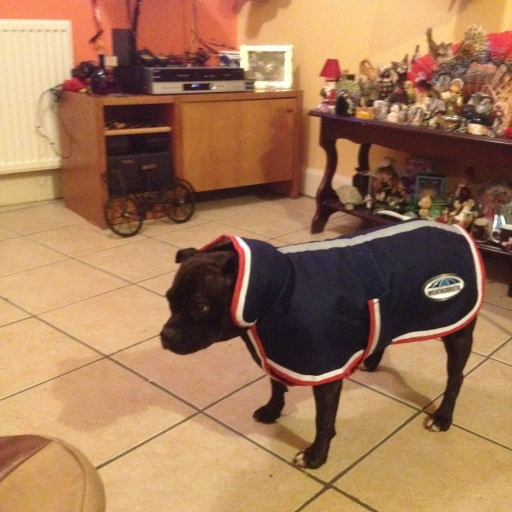 Lola wearing her new coat IMG_08161_zpsmmgbjjew